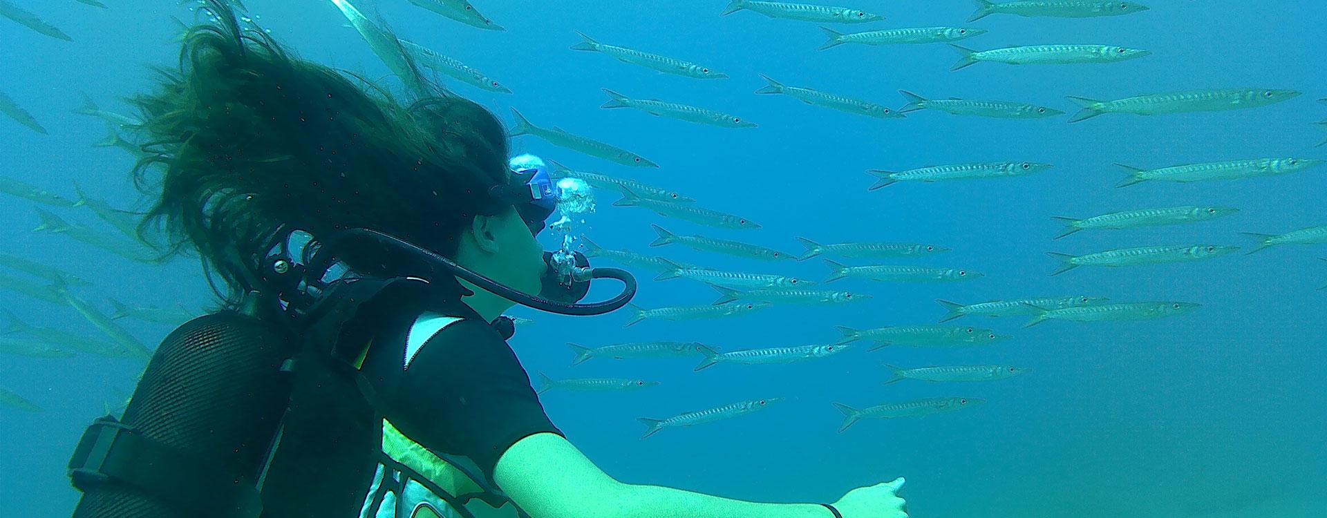 Scuba Diving in Diving Park